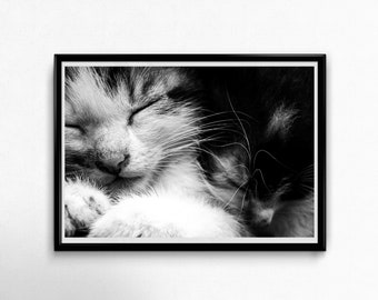 Fine Art Poster Print: Eddie & Patsy - photography - cat - kitten - cute - cuddles - love - family - friendship - siblings