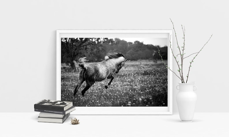 Poster: Horse Photography Black and white Running horse Animal image 0
