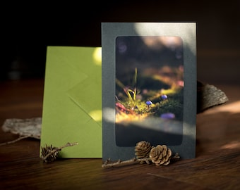 Greeting Card with envelope: MUSHROOMS VI----- Nature  Forest Woods Birthday Autumn Fall Magical Atmospheric Warm Birthday