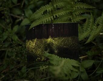 Postcard: FERN -  woods - fern - green - photography - print - hope - silence - tranquility - quietness - nature