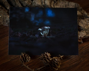 Set of 2 Postcards: MUSHROOMS ------ greeting card - nature - snailmail - forest - woods - autumn - fall - night - evening - blue