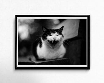 Fine Art Poster Print: Vampire Cat --- wall art - photography - cat poster - yawning cat - black and white - fun -teeth