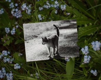 Set of 2 Postcards: EDDIE III ----  cat -  animal - greeting card - black and white - birthday - shelter - charity - rescue - stray cat