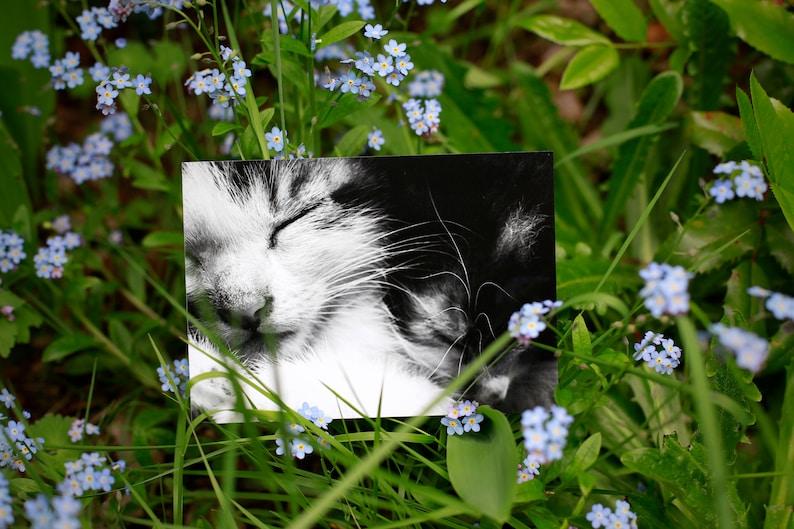Postcard: Eddie & Patsy  cat  kitten  cute  cuddles  image 0