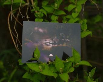 "Postcard: ""Ophelia III""  ---- pond mystical magical atmospheric dark calm nature photography"