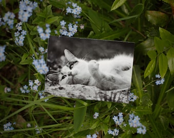Set of 2 Postcards: LIZZY II ----  cat -  animal - greeting card - black and white - birthday - shelter - charity - rescue - stray cat
