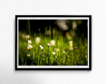 Fine Art Poster Print: Just Some Sunday Afternoon Buzzing ---- photography - bumblebee - nature - garden - sunny - summer - warm - green