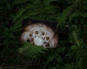 Postcard: SEMICIRCLE Skulls Memento mori Dark Eerie  Art print Photography print Wall art Goth Creepy Decor Warm colors Fern Forest Woods