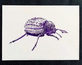 Darkling Namib Beetle – An Original Artwork Ink Drawing/Painting on A5, Animal Wall Art, a Truly Unique One Off Gift - only one available!