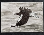 Steller's Sea Eagle – An Original Artwork Ink Drawing/Painting on A5, Animal Wall Art, a Truly Unique One Off Gift - only one available!