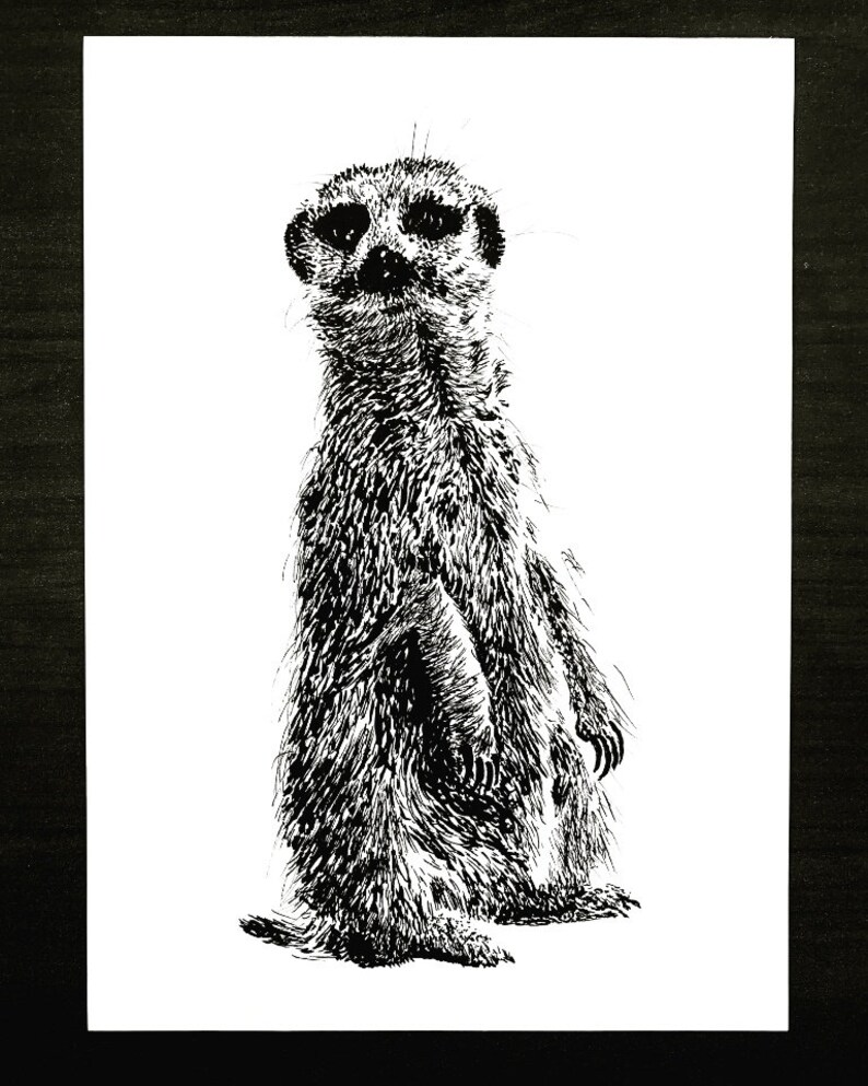 Who dat Compare This Meerkat  An Original Artwork Ink image 0