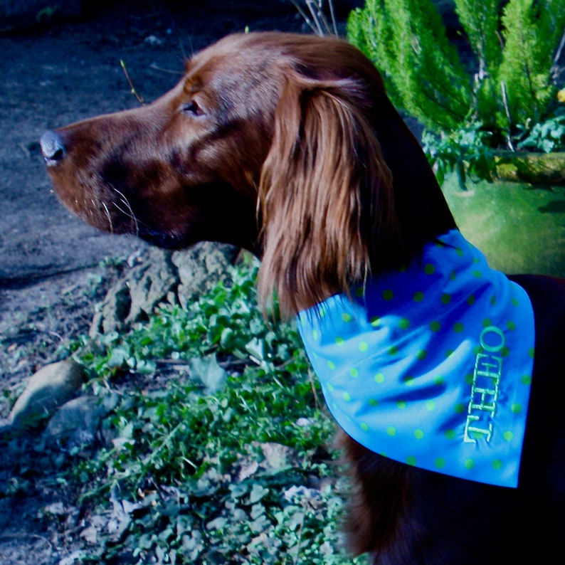 Blau mit kiwigrünen Punkten  Hundehalstuch mit Tunnel image 0