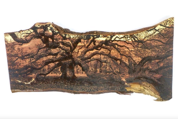 "Angel Oak Tree, large pyrography on red cedar | woodburned | handmade | 21""H x 44""L x 1""D"