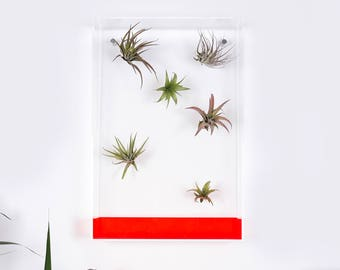 Airbox, the air plant display for design lovers.