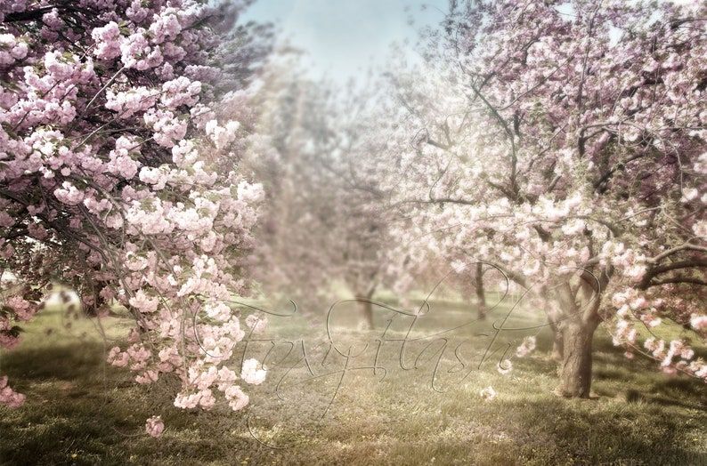 Maternity backdrop Cherry blossom tree background Summer