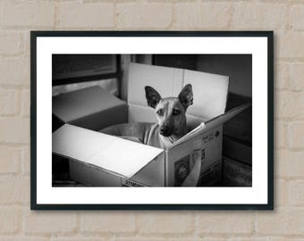 Dog in box. Photography Prints, home decor, home prints, gifts, wall art, prints, gift ideas, home accessories, art prints