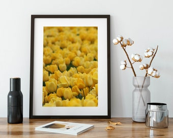 Tulips - Office Decor - Photography - Flowers - Pop of Color - Tulip Festival - Instant Download - Spring Art - Skagit Valley - Yellow Tulip