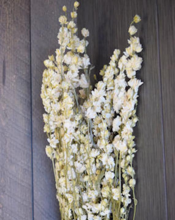 White larkspur dried larkspur white flowers dried etsy image 0 mightylinksfo