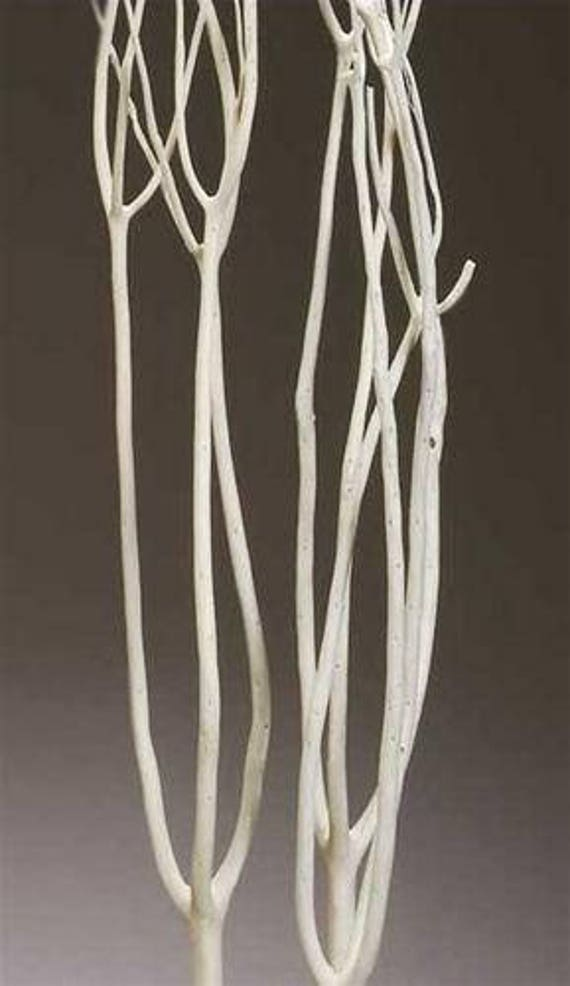 Mitsumata rami sbiancati bianco rami rami secchi rami etsy - Rami secchi decorativi ...