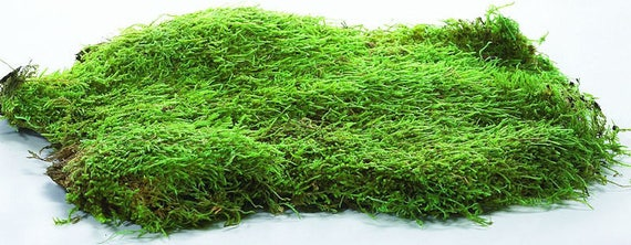 3 Colors 6 Pieces Green Dried Moss Decorative Green Moss Preserved Floral Moss for Plant Garden Lawn Flower Crafts Wedding Party Decoration