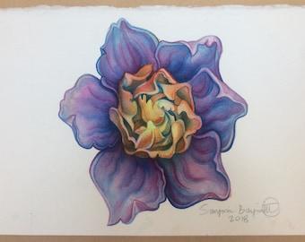 Rainbow Gardenia 1