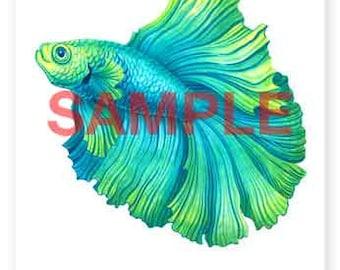 Aquamarine Betta Fish - A4 Signed Giclee Print