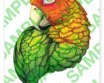 Amazon Parrot A4 digital PDF download