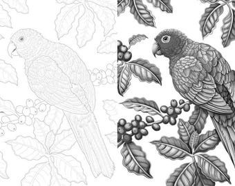 Coffee Parrot colouring template - Outlines with greyscale version