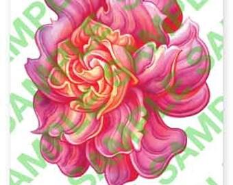 Rainbow Gardenia 2