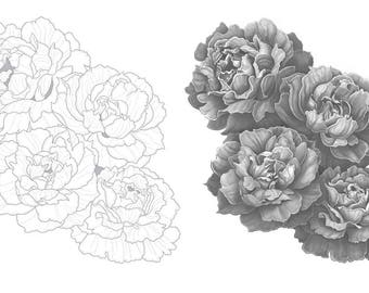 Peony Rose colouring template - Outlines with greyscale version