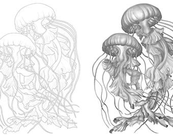 Jellyfish colouring template - Outlines with greyscale version