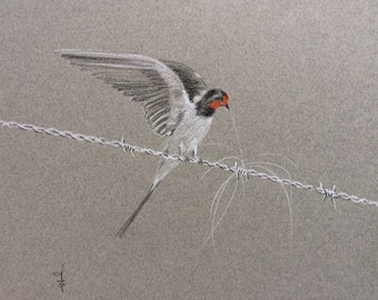 Three pencil drawing, bird on wire design on grey paper