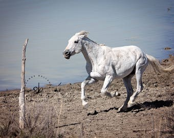 Sand Wash Basin wild horse - Snowman, Photography Print