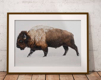 Buffalo Wall Art, Bison Wall Art, Bison Print, Buffalo Print, Animal Wall Art, Animal Print, Living Room Art, Farmhouse Decor, Animal Poster