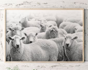Sheep Print/ Bedroom Wall Art/ Printable Art/ Black and White/ Farmhouse Decor/ Sheep Poster/ Over Bed Art/ Farm Animal Print/ Farm Wall Art