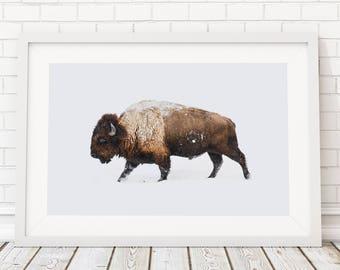 Buffalo Print/ Bison Print/ Printable Art/ Buffalo Wall Art/ Large Wall Art/ Animal Prints/Living Room Art/ Bison Photography/Bison Wall Art