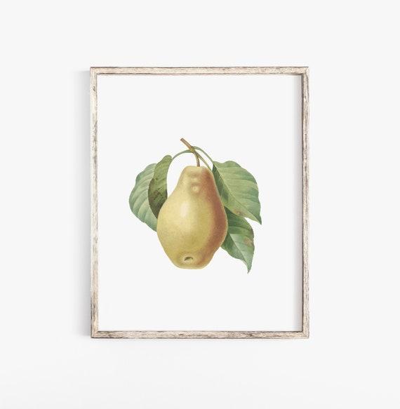 I forgotten My Pears Vintage Vintage Art Print Poster A1 A2 A3 A4 A5