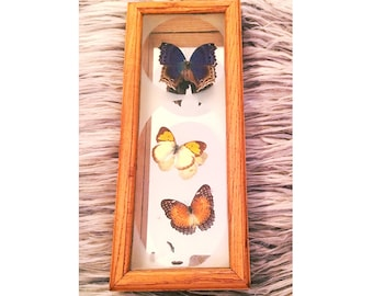 Vintage Framed Butterfly Collection/Butterfly Specimens/Vintage Butterfly Art/Preserved Butterfly Collection/Vintage Shadowbox/Botanical Art