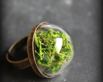 "Ring ""Nursery"" MOSS terrarium"