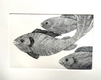 Fish Print ' Silver Darlings'