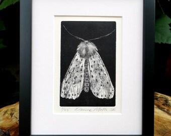 Ermine Moth Print