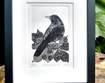 Blackbird with Blackberries Print. Handmade limited edition etching