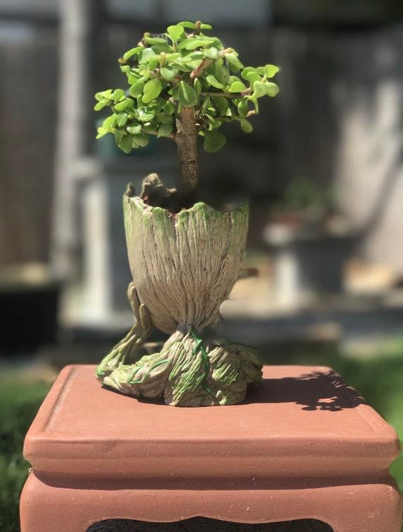 Jade Bonsai Tree Baby Groot Bonsai Gift