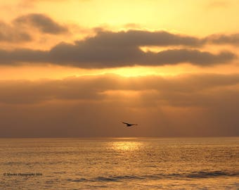 Golden Sea Gull