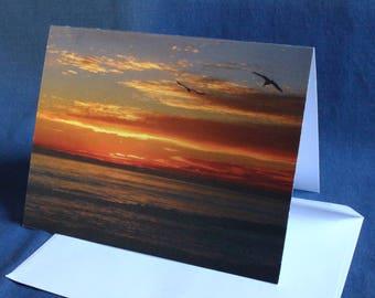 Sea Gulls at Sunset (Note Card)