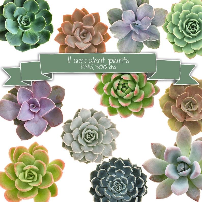 Succulent Plants Clipart Set • Succulents Wedding Invitation Clip Art •  Floral Digital Scrapbooking • DIY Stationery • Instant Download PNG