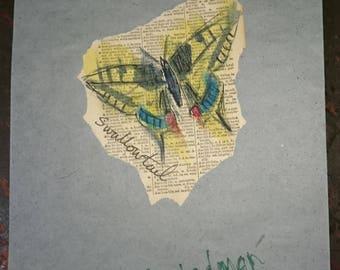 Swallowtail 3/3