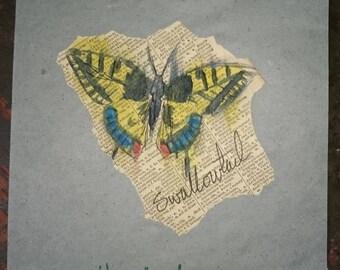 Swallowtail 1/3