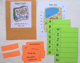 Teacher Made Science Center Learning Resource Game Parts of a Plant Cell