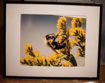 Bee in Goldenrod Color Framed Photo